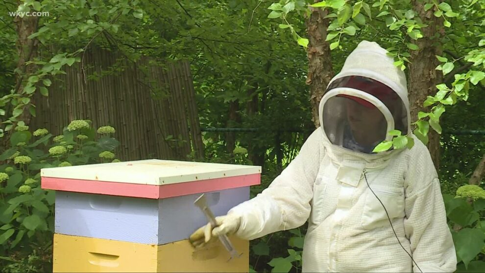 Beekeeping 101: The buzz behind the trend